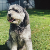 Marielle's dog Ozzy
