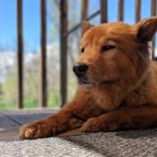 Nina's dog Kaylee