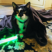 Jedi, a tuxedo cat, with a lightsaber and wearing a Jedi robe