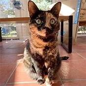 Sarah's cat Cowboy, a tortoiseshell cat