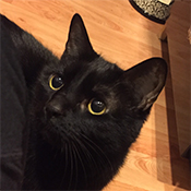 Sara's cat Bella, a black cat with yellow eyes